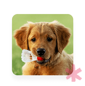 dog-day-care-review-for-staff-scheduling-app